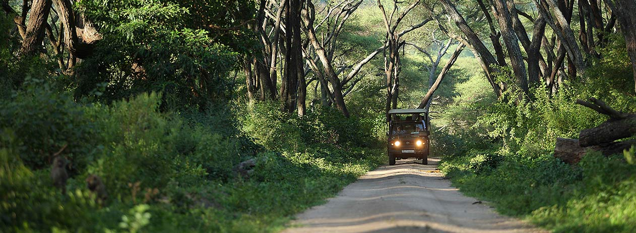 andBeyond Lake Manyara Tree Lodge Nature